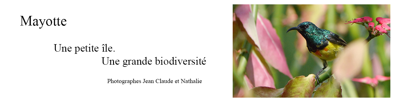 Mayotte. Une île une biodiversité