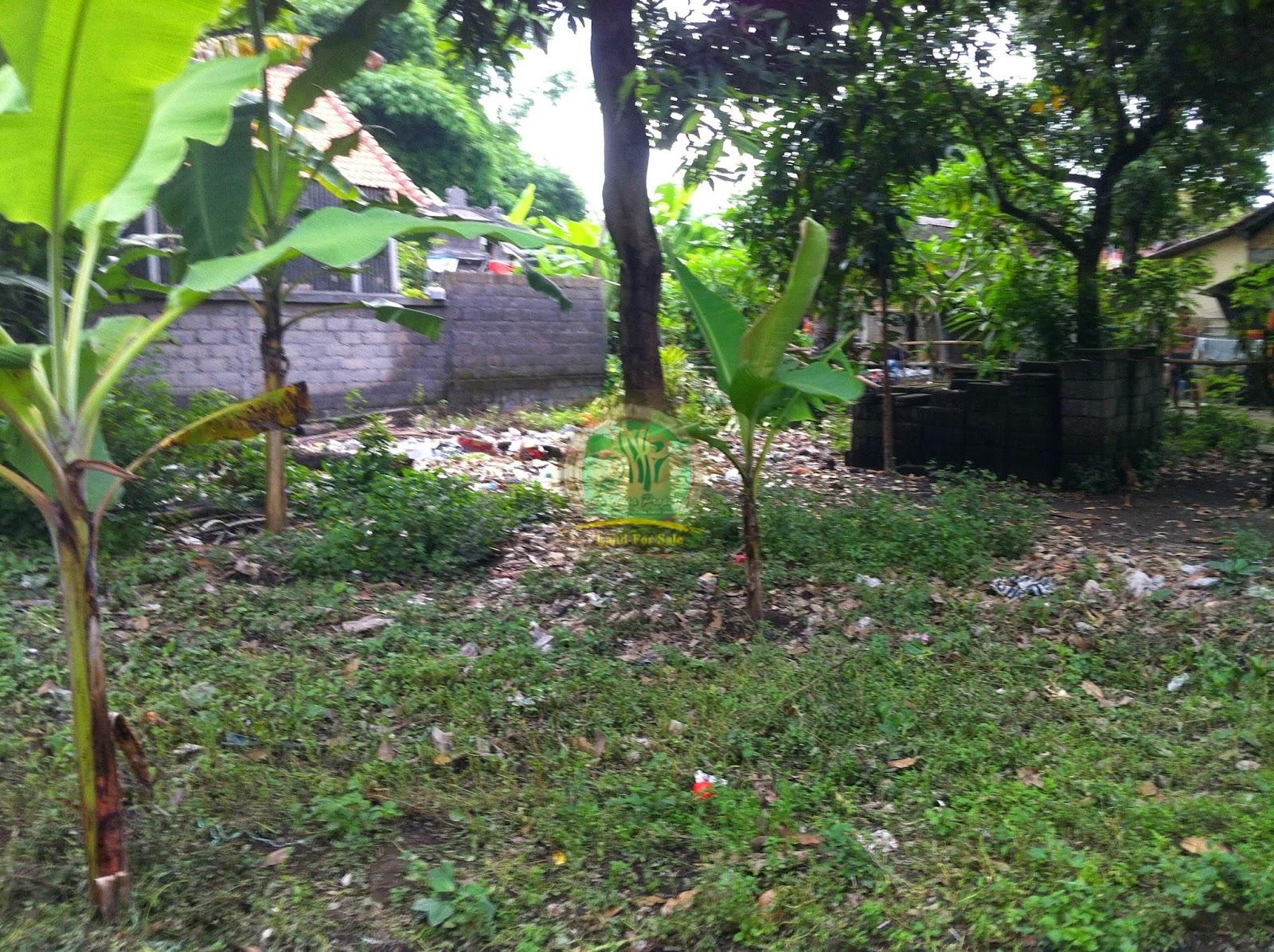 Tanah Murah di Denpasat bali cocok untuk rumah
