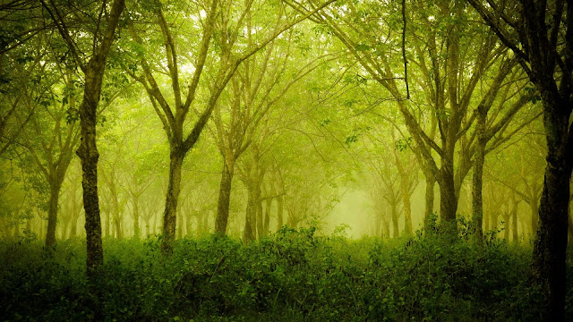 Foggy Thick Forest HD Wallpaper