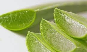 Ramuan Herbal untuk Penyakit ISPA