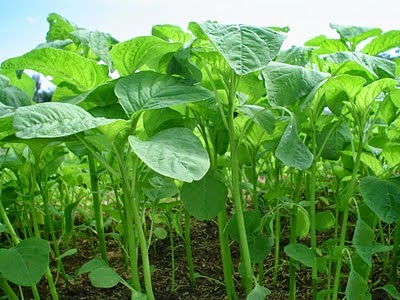 Kesehatan, Makanan Sehat, Sarapan, Bayam, Sayuran