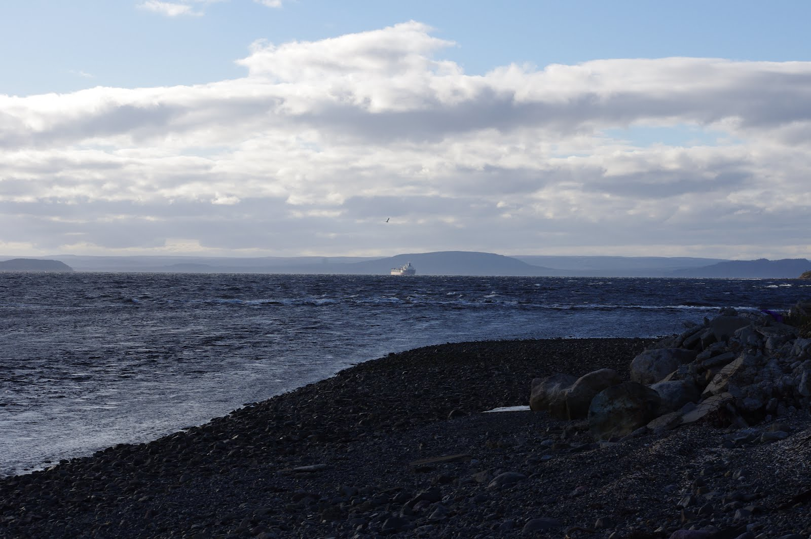 My Newfoundland   photo I A Newfoundlander Born And Bred