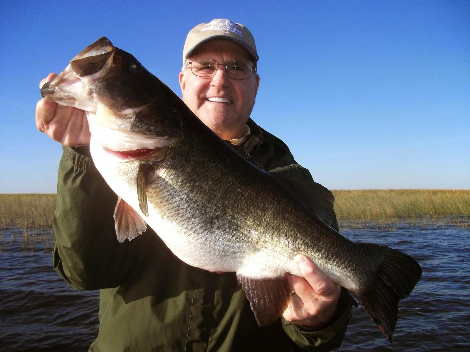 Big bass of 2014 if you like catching big bass lake for Big bass fishing