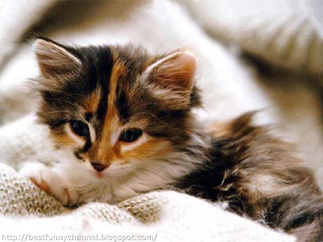 Nice kitten.