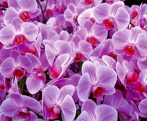 As Flores falam