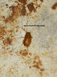 Invertebrado cavernícola jiennense de 2017 (CLICK)