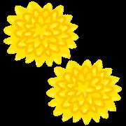 食用菊・つま菊のイラスト