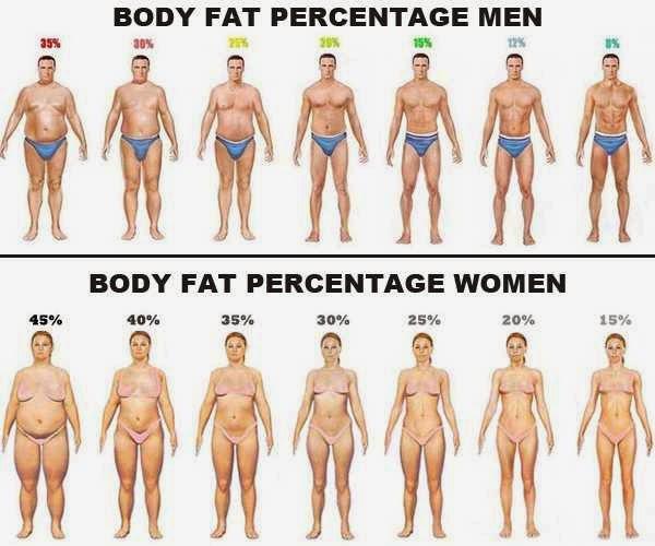 содержание мышц и жира в теле человека телефоны