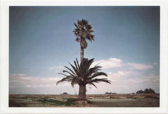 dirty photos - on the island of - photo of twin palm tree
