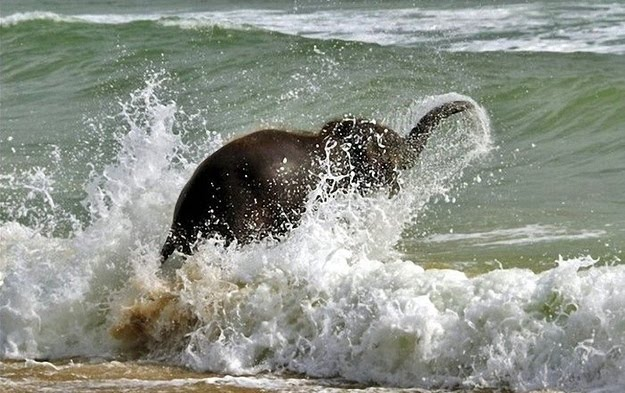 elephant on beach, baby elephant playing, cute baby elephant, baby