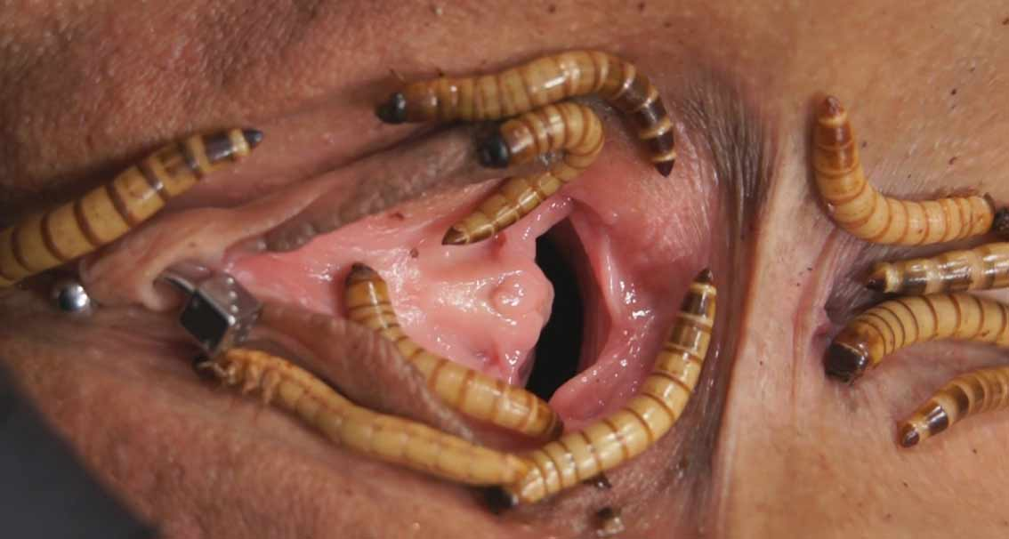 pussyeating erdbeermund worms