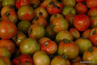 winter tomato