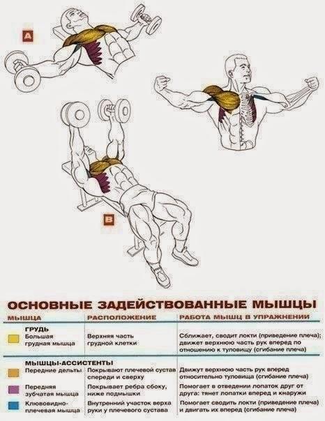Упражнения для грудиных мышц в домашних условий