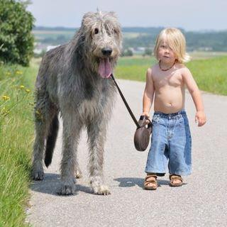 Irish Wolfhound named Belker.