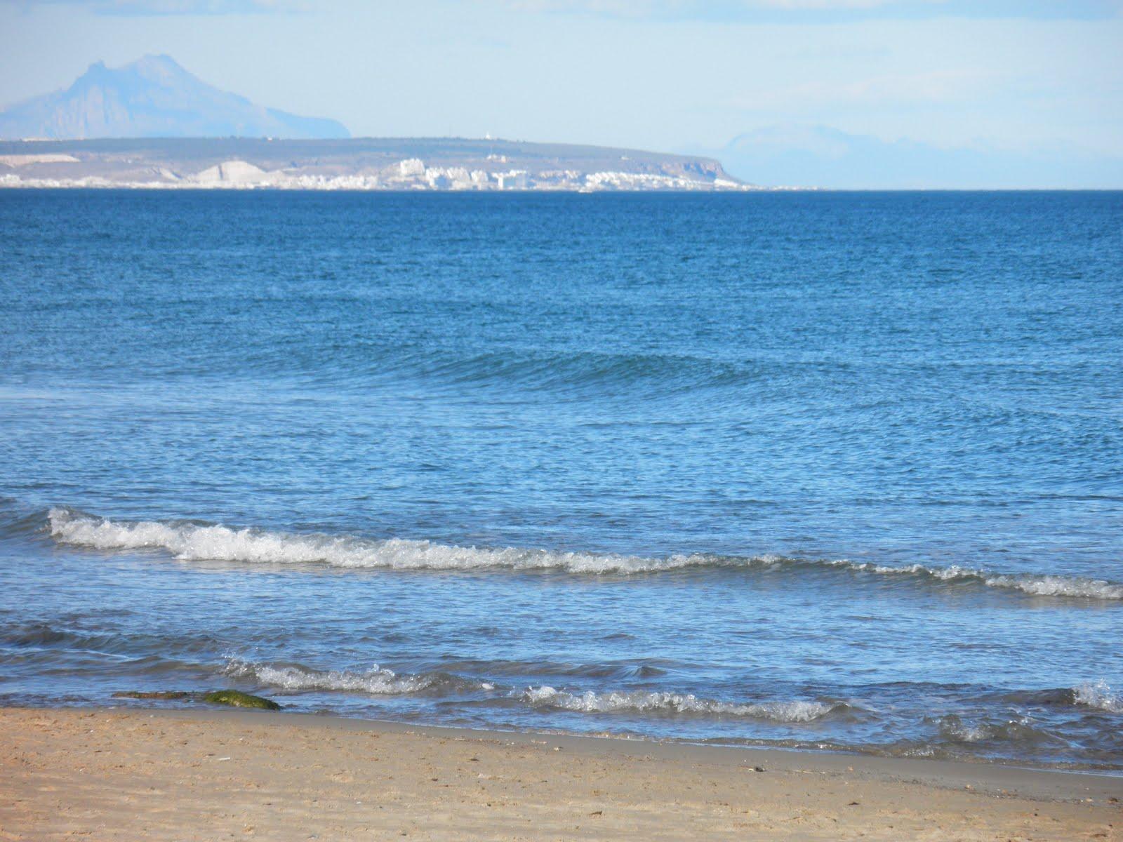 Maite free playas de guardamar flora de la laguna de la mata - Cabo santa pola ...