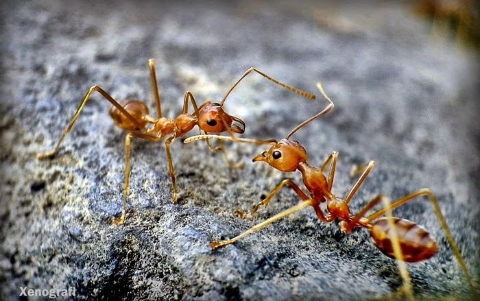 Tips Menghindari Sangkar Burung dari Semut