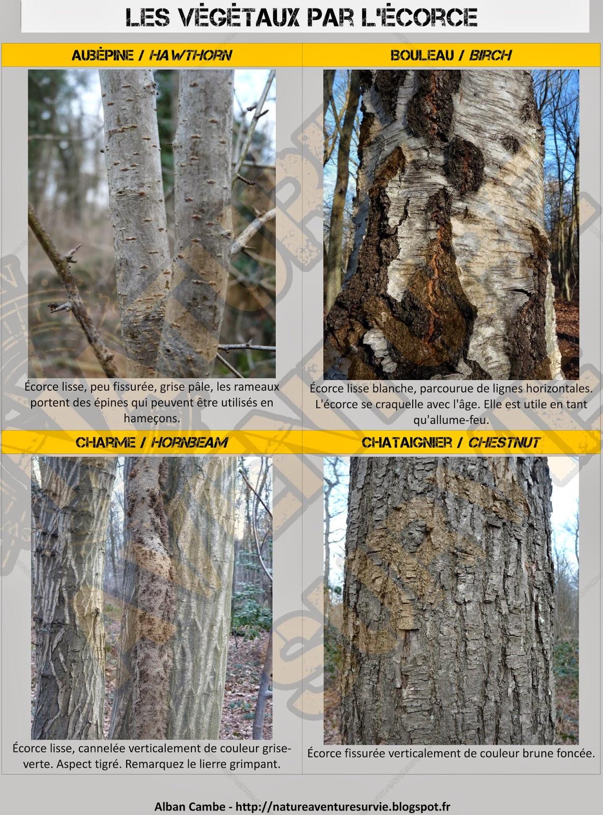 Identifier les arbres en hiver nature aventure survie - Reconnaitre les arbres par leur tronc ...