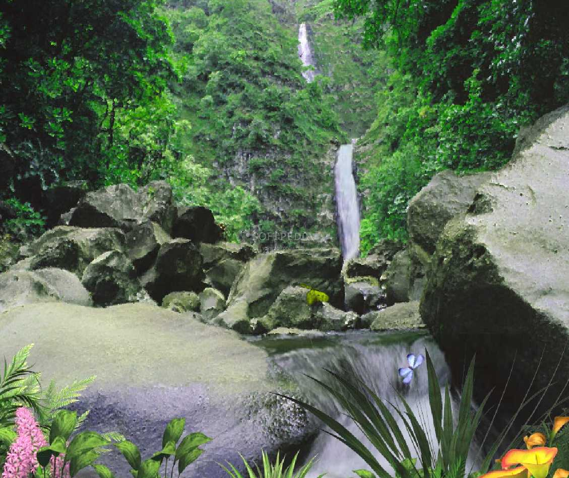 http://2.bp.blogspot.com/-UydGhVipycg/Tp4gZJkTFmI/AAAAAAAAAQE/MIqh65qOku8/s1600/AD-Jungle-Waterfall-Animated-Desktop-Wallpaper_1.png.jpeg