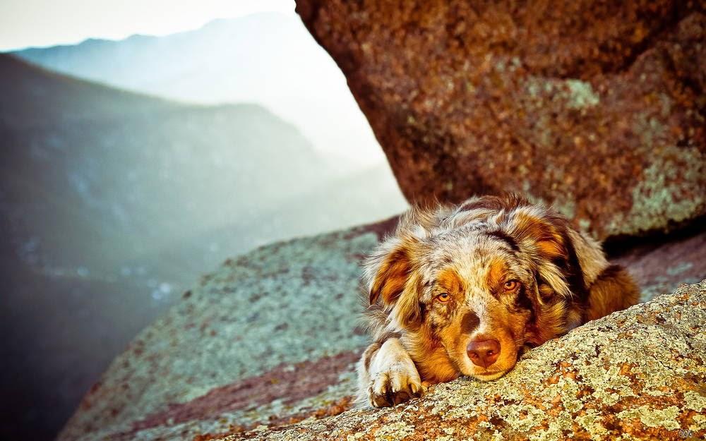 imagenes de razas de perros