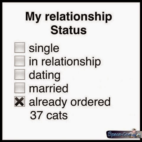 funny lonely people cats