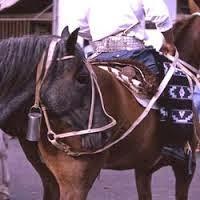 """""""No hay que ensillar el caballo antes de enlazarlo"""""""