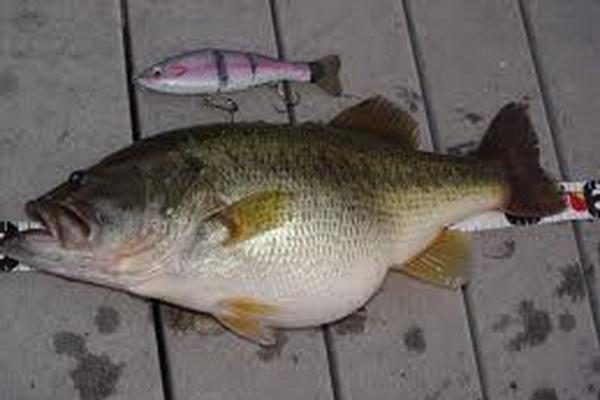 Poor richard 2011 hermann for Missouri bass fishing