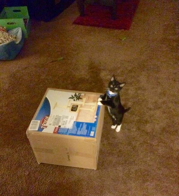 Смешной котенок: Это мне подарочек?