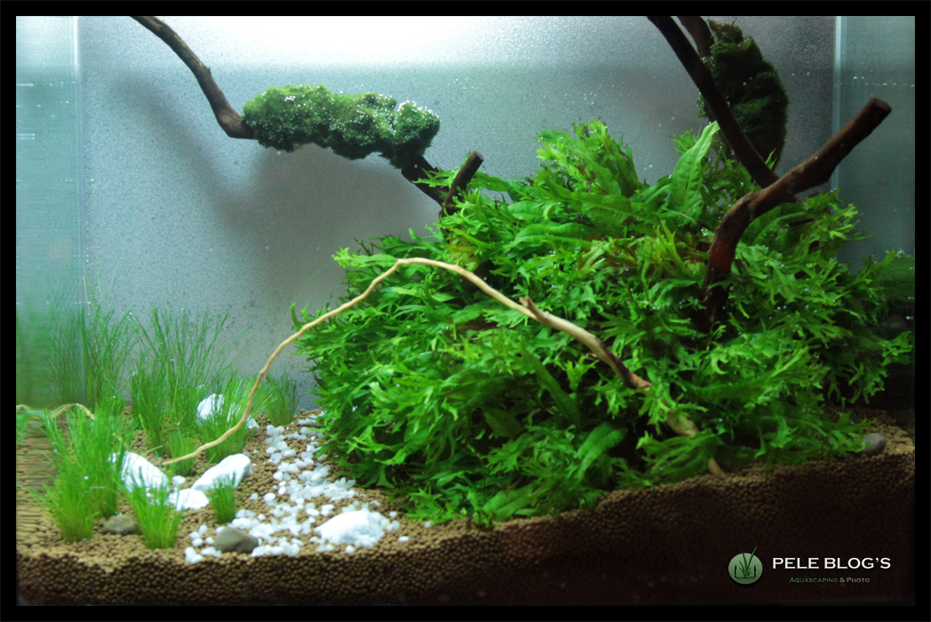 Pele blog 39 s ganadores barcelona aquascaping contest 2011 - Aquascape espana ...