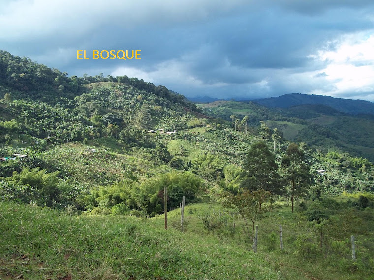 EL BOSQUE