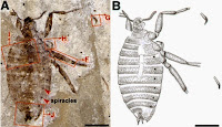 http://sciencythoughts.blogspot.co.uk/2014/12/a-new-species-of-flea-from-early.html