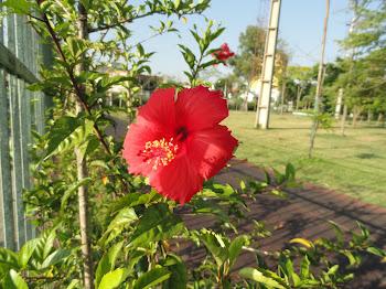 Flor Vermelha que Encanta