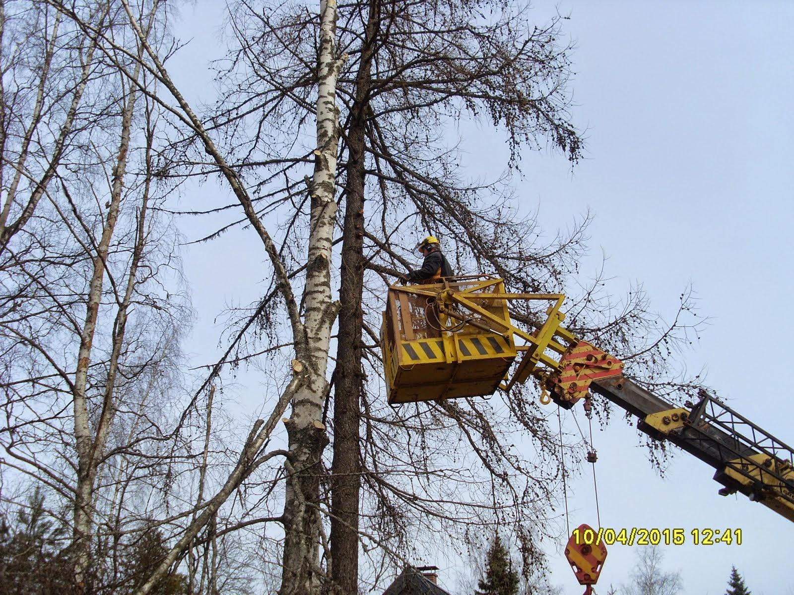 Tilanteesta riippuen joko kaadonsuuntaaja stalpenilla tai jopa nostolavalta aloittaen puiden kaadot