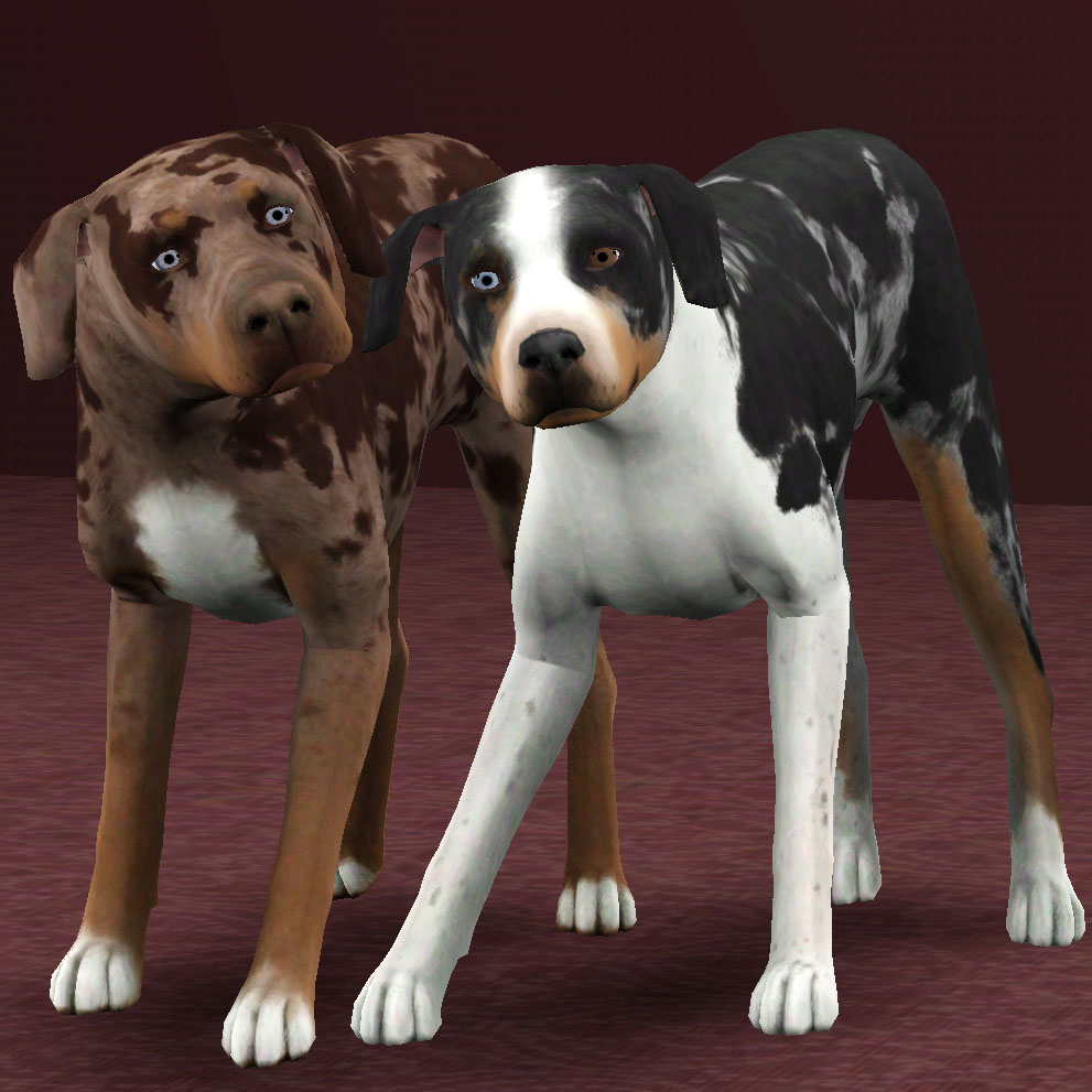 My sims 3 blog catahoula leopard dogs by pharaohhound