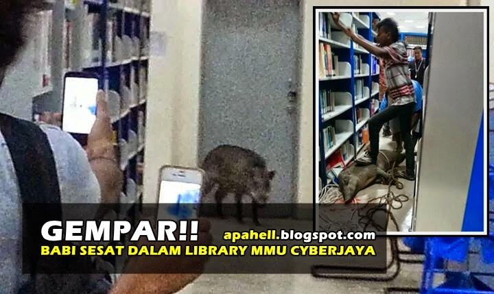 Babi Serang Perpustakaan MMU Cyberjaya (6 Gambar) http://apahell.blogspot.com/2015/01/babi-serang-perpustakaan-mmu-cyberjaya.html