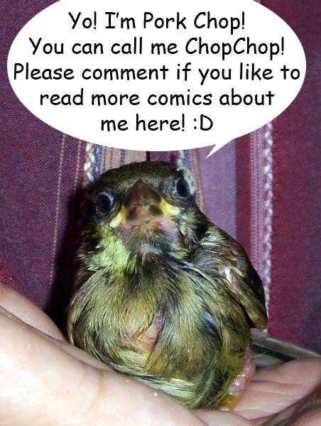 tamed pet sparrow