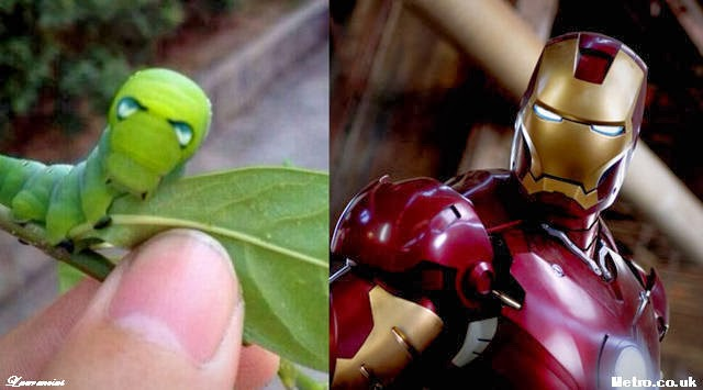 Ulat-Mirip-Iron-Man