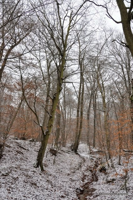 Snowy Forest, Frankfurt, Germany