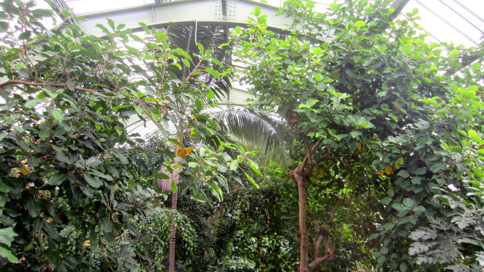 Matin lumineux jardin des plantes les grandes serres part 1 for Plante artificielle grimpante