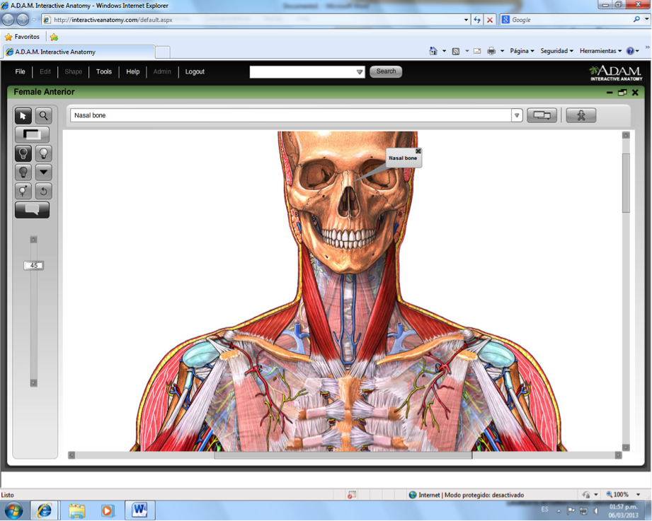 Funky Adam Interactive Anatomy Motif - Internal organs diagram ...