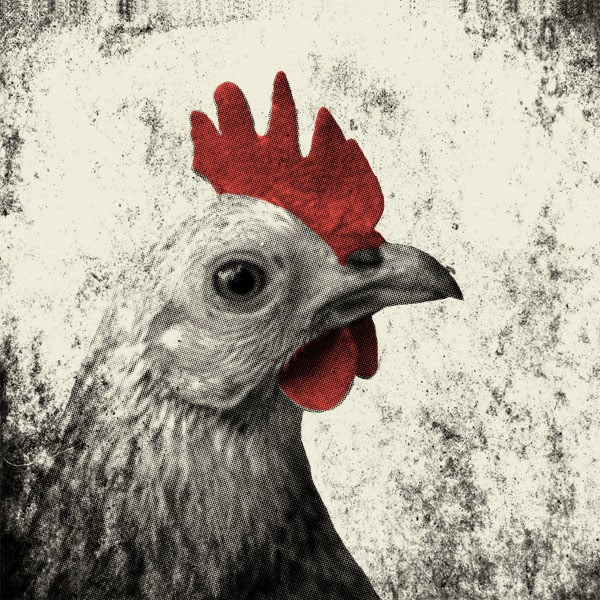 Halftone Rooster in Photoshop - How To