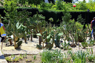 Balchik Botanical Garden, Cacti - Photo Relu