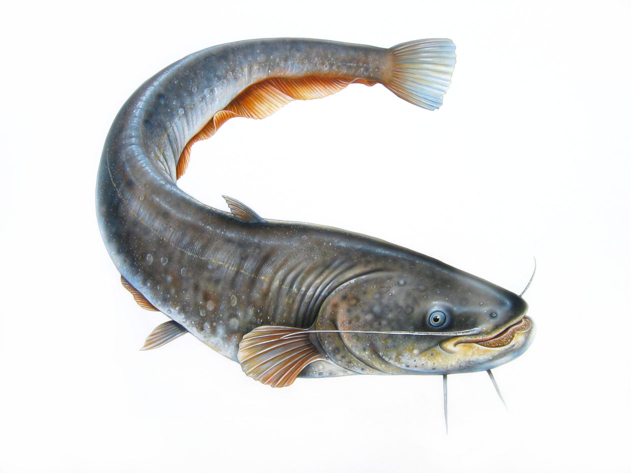 Fish rr cat fish for Best time to fish for catfish