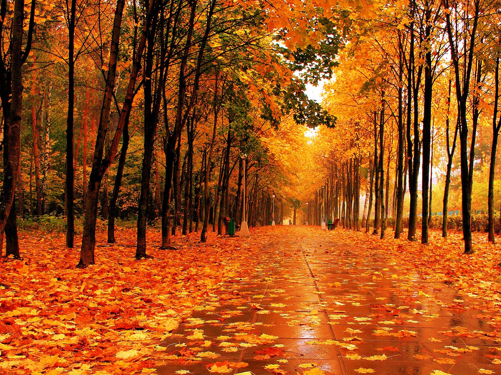 http://2.bp.blogspot.com/-V2Ei9uV3FEY/Tpr0WpLnseI/AAAAAAAAAfA/YbH76zDWD3U/s1600/park-walk-fall-wll-inkbluesky.png