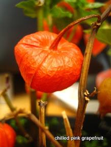 Chinese Lantern Plant (Physalis)