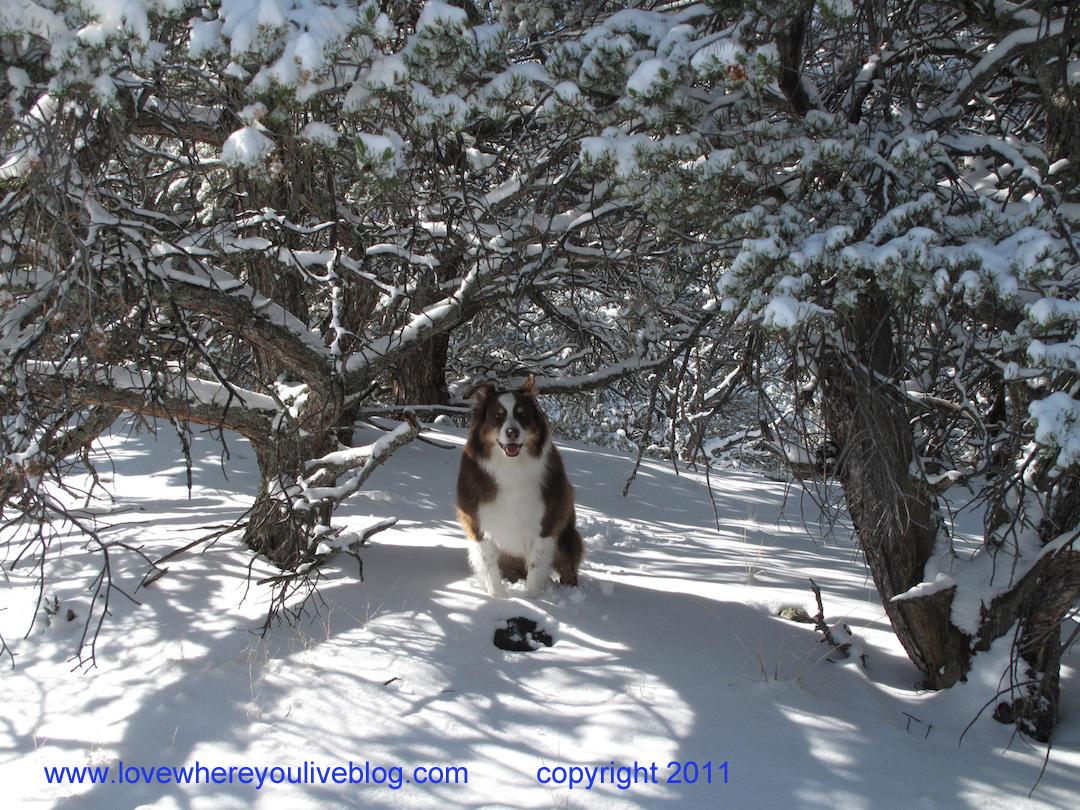 http://2.bp.blogspot.com/-V2XpxG6ZdcY/TrSLLRBHyQI/AAAAAAAAD0I/tDeTwRgdV8Y/s1600/sam+in+snow+copy.jpg