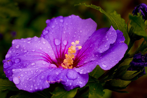 literary devices used in purple hibiscus