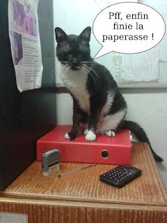 Un chat secrétaire travaille avec classeur, caculatrice et tampon.