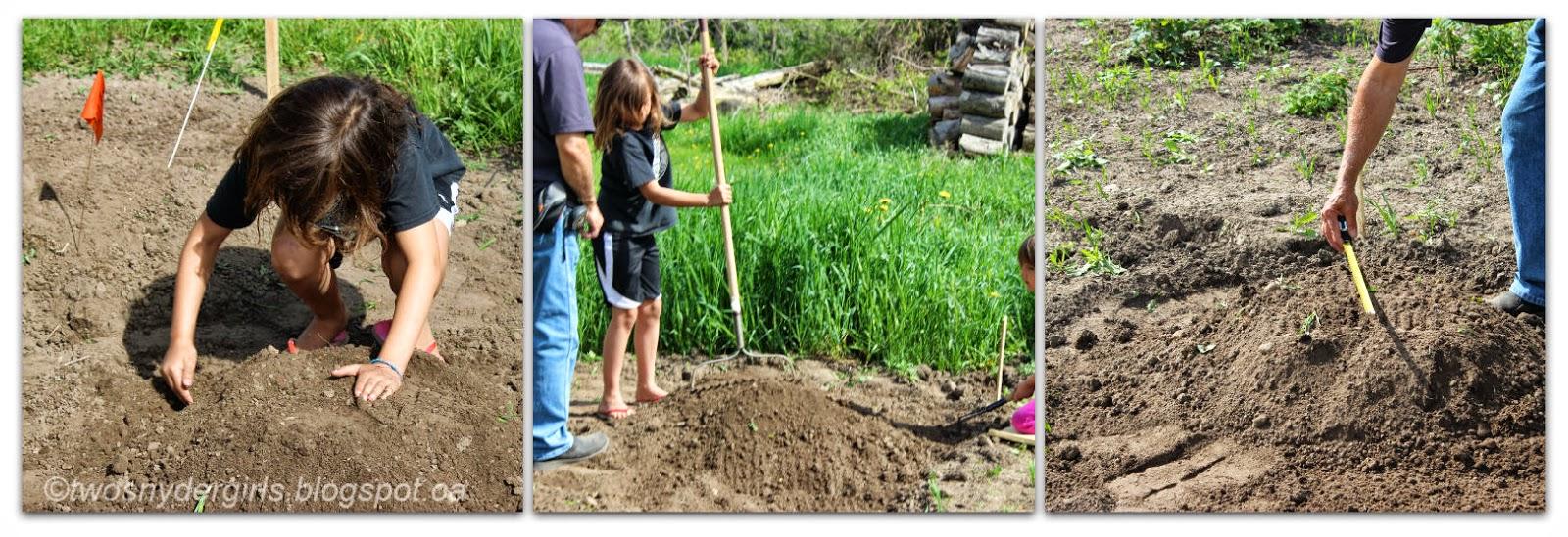 Preparing garden mounds