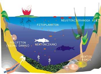 Keseimbangan Ekosistemaldinblog