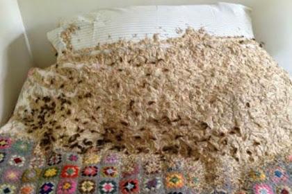 Wanita Terkejut Temukan Sarang Tawon Tutupi Tempat Tidur
